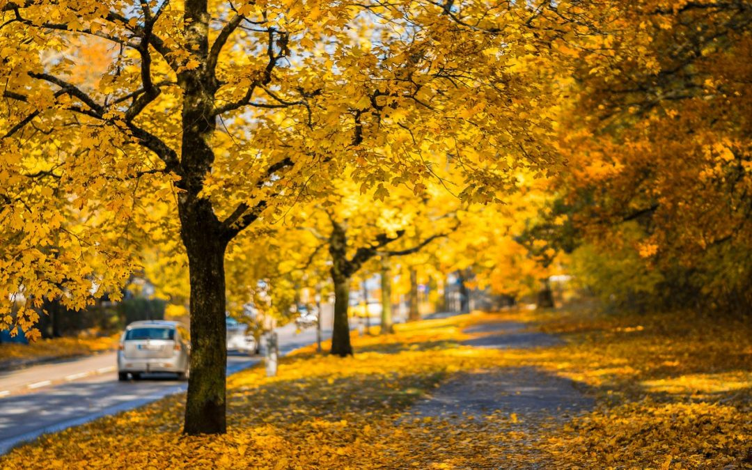 fall leaves on ground with car driving