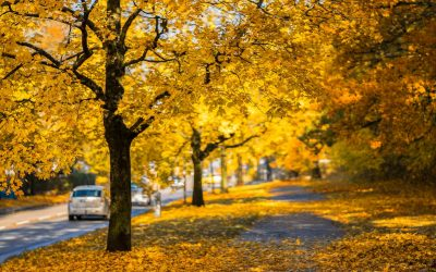 How to Avoid Leaf Damage On Your Car